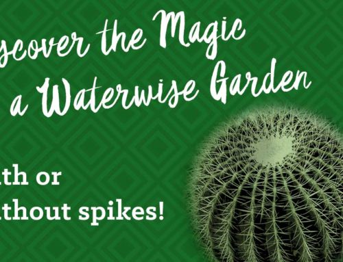 Discover the Magic of a Waterwise Garden