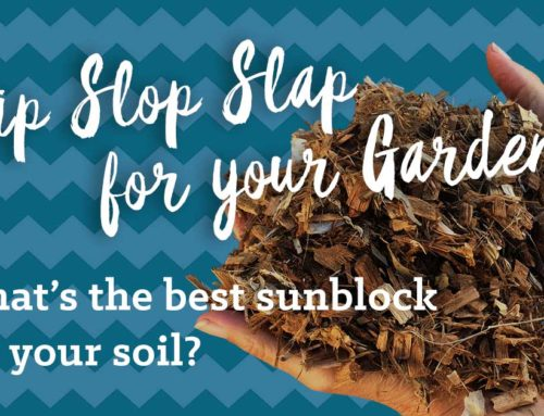 Slip Slop Slap for your garden